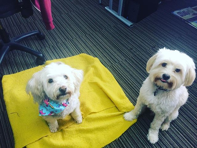 Our favourite two members of team are back in the office today