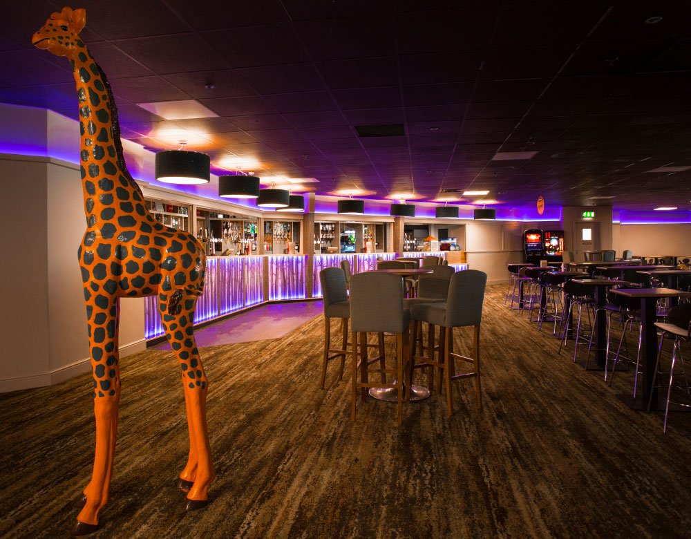 Photoshoot for Haven - giraffe in the bar